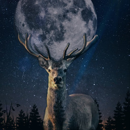 freetoedit stag moon trees night nightbackground stars grass treesilhoutte efect picture lensflare madewithpicsart edit edited photoshop cool