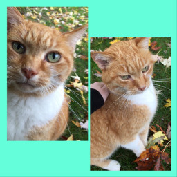 catsofpicsart catsphotography cat