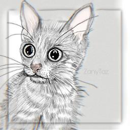 drawing kitten wideeyes cat sketch illistration freetoedit