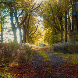 freetoedit photography forest trees nature