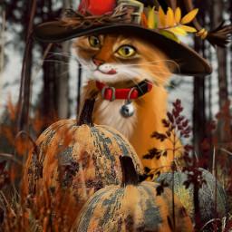 freetoedit hallooween bighat pumpkins grasses