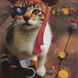 cat pirate stickers ftestickers magicbrush picsarteffects madewithpicsart halloween animals picsarttools remixit freetoedit