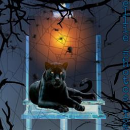 freetoedit panther spider myedit ircinnerartist
