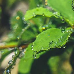 water waterdrops nature naturephotography macro freetoedit pcpowerofnature powerofnature
