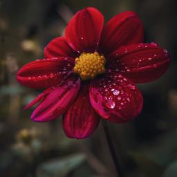 freetoedit nature flower naturelover fall