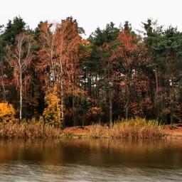 autumn autumnvibes fall forest fallcolors lake trees beautifulday beautifulnature poland myphoto myedit myart madewithpicsart joannart heypicsart freetoedit