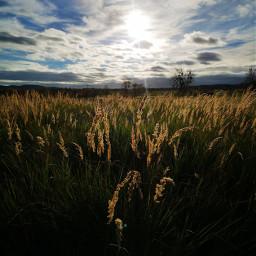 freetoedit grasses backlit background landscape