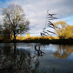 freetoedit river grasses waterreflection tree