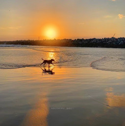 sun sunrise dawn dawnsky dog runner sunshine beach breakwater freetoedit