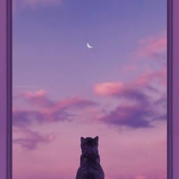 cat sky skies myphotography myedit
