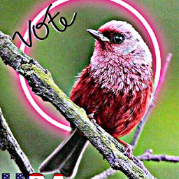 pink red bird petsandanimals branch tree vote usa flag redwhiteandblue text freetoedit rcneonlight neonlight