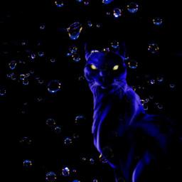 dark drops cat panther jaguar fantasy freetoedit