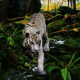 freetoedit whitetiger forest beautyofnature beautyallaround