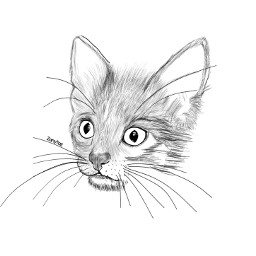 sketchy kitty sketch pet cat drawing lineart face furball outline art wideeyes animalhead portrait drawtool whiskers freetoedit drawnbyme