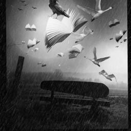 freetoedit flyingbooks blackandwhite photoediting surrealism srcflyingbooks