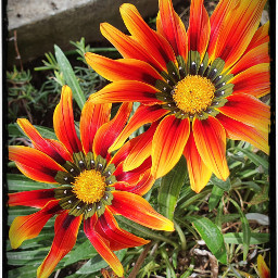 loreak lorak💕 flores flovers⚘ las lorak flovers