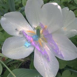 freetoedit flower fairyvibes photography