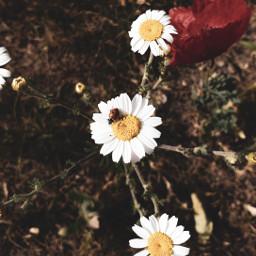 flowers ladybug freetoedit