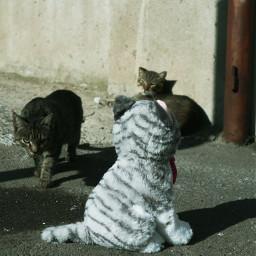 cats freetoedit