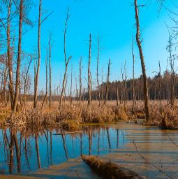 photography forest nature freetoedit lake