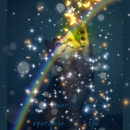 butterfly neon neonbutterfly sparkle cat kitty kitten rainbow different beyourself bedifferent inawordwhereeveryoneisthesamebediffernt interesting freetoedit