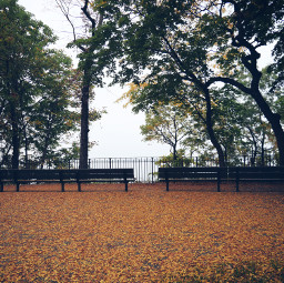 freetoedit panoramic view bench fall leaves fallenleaves leaf orange nature