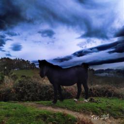historiasdes_veladas_de_mi_dia_a_dia wildlife wildfree