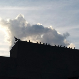 birds bird sky clouds cloud high طيور سماء غيوم beautiful nicephoto niceweather