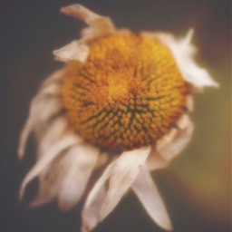 hi flower freetoedit
