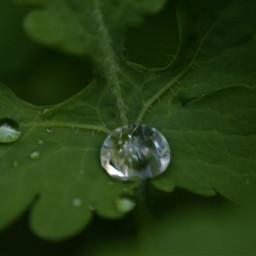gota drop drops dropsrain raindrops gotasdelluvia lluvia otoño2020 2020 macrophoto macrophotography macroshot