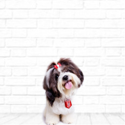 freetoedit cute puppy dog pretty white room furry furryfriend puppylove puppydogpals puppycuddles