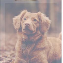 sticker cute dog autumn cutedoggo photography editedbymyself fyp freetoedit