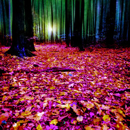 fall landscape forest woods freetoedit