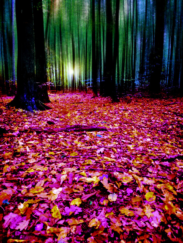 #fall #landscape #forest #woods