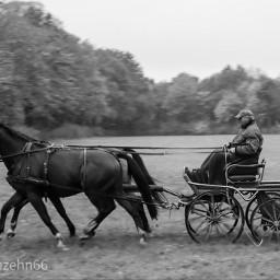 freetoedit nature horse blackandwhite