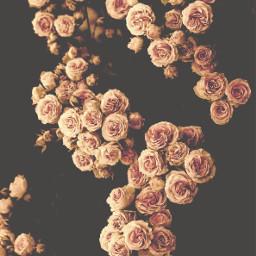 nature woods flowers roses naturesbeauty freetoedit