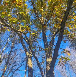 freetoedit autumn autumncolors autumnleaves