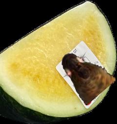 watermelon yellow bird lmaowhat freetoedit