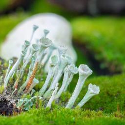 fungi moss green plant nature smallworld macro almostmacro atmosphere photo photography canon canon700d photoshop photoshopcs5 freetoedit