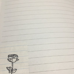 freetoedit rose sketch paper journal linedpaper drawing flower flowersketch rosesketch