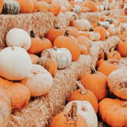 freetoedit 800followers fall pumpkins followback haveagoodday lysmmmm