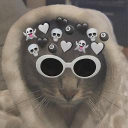 datsmycat cat koska haha lol amongus love zournatsidou hahahahha freetoedit