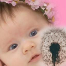 dandelion freetoedit ircdandelionsilhouette dandelionsilhouette