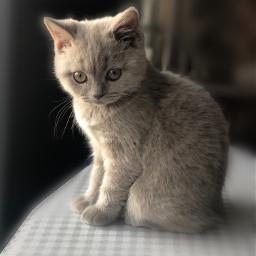cat littlecat cutecat cute