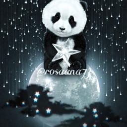freetoedit panda bear pandabear srcblackclouds