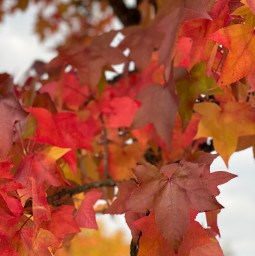 freetoedit couleurs nature