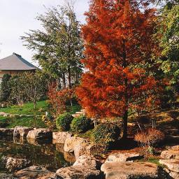 tree colorful naturephotography nature