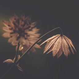 nature simplethings wildplants simple solitude freetoedit