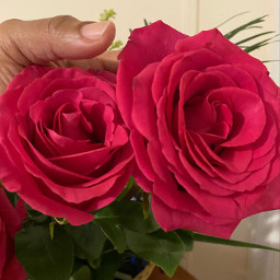 sunday roses beautiful god