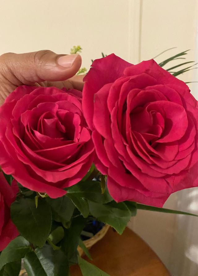#sunday #roses #beautiful #god 👋🥰🌹🍃